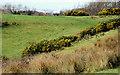 J3370 : The Lagan Meadows walk, Belfast (21) by Albert Bridge