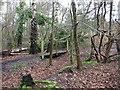 SZ0195 : Woodland Footpath, Canford Heath by Lorraine and Keith Bowdler