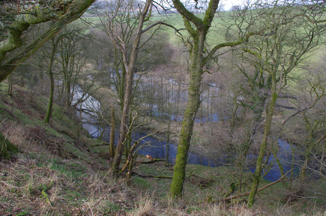 Lupton Beck passes through Hobby Wood