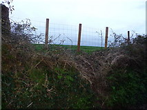SS9412 : Tiverton : Bakers Hill, Fence by Lewis Clarke