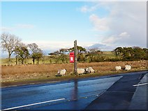 NY3141 : An isolated postbox by Rose and Trev Clough