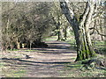 NY9864 : Riverbank footpath west of West Green (2) by Mike Quinn