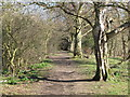 NY9864 : Riverbank footpath west of West Green (3) by Mike Quinn