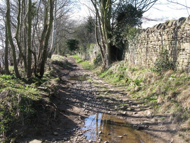 Riverbank footpath east of Corbridge Mill