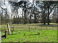 TG1208 : Sheep grazing by Marlingford Hall by Evelyn Simak