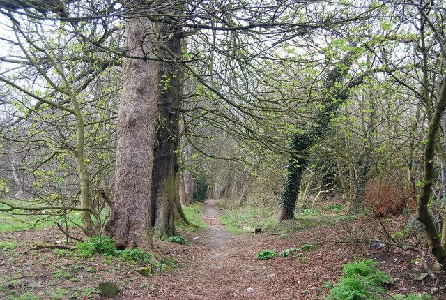Strange's Grove, Tunbridge Wells Common