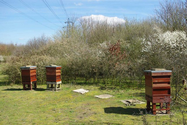 Thames Chase Bees