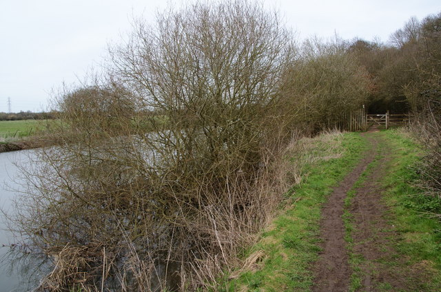 The Thames Path enters Wytham Great Wood