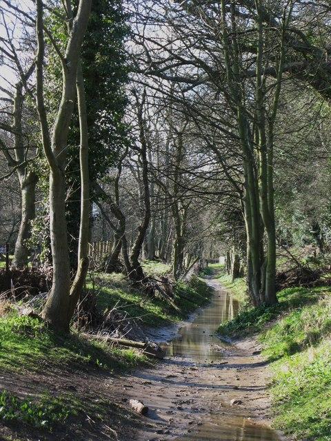 Riverbank footpath east of Corbridge Mill (2)