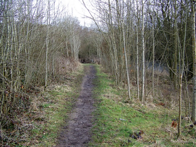 Path beside the River Leven