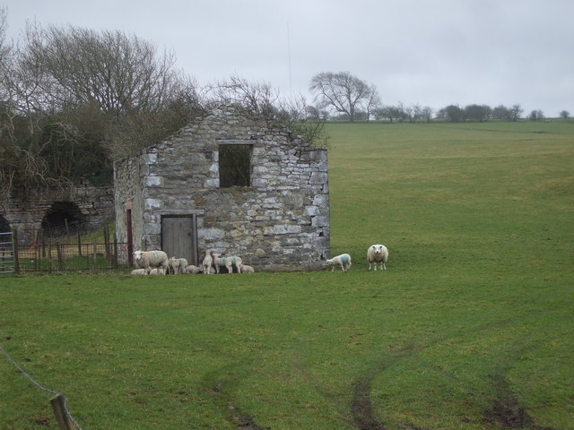 Lambs shelter from driving rain in the lee of old quarry workings