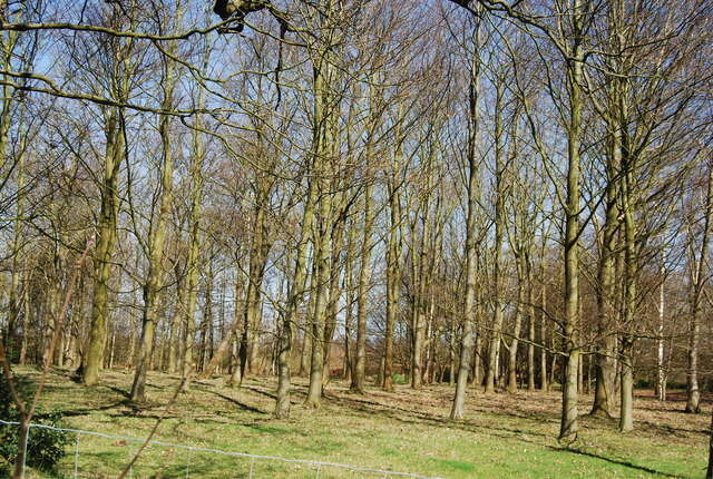 Woodland by the High Weald Landscape Trail