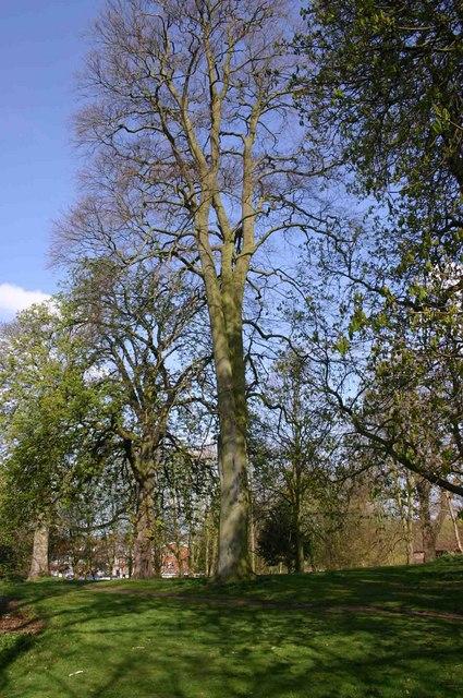 Priory Park, Warwick