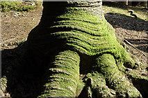 NY4020 : Tree trunk by Philip Halling