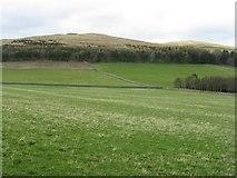 NT4437 : Plantation and farmland at Whytbank by M J Richardson