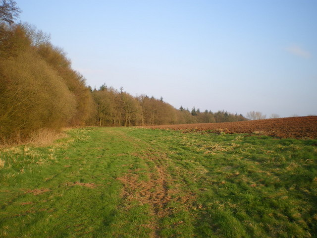 The western edge of Picmoor Wood