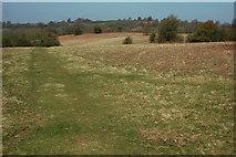 SO3829 : Ewyas Harold Common by Philip Halling