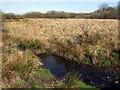 SN0125 : Wallis Moor by ceridwen