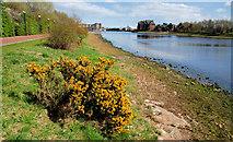 J3473 : The River Lagan near the Gasworks, Belfast by Albert Bridge