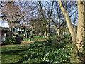 TM2320 : Frinton Gate House Garden by PAUL FARMER