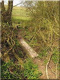 TQ7033 : Footbridge and stile near Shearnfold Wood by David Anstiss
