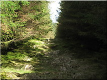 NY6176 : Firebreak in the plantation on Black Rigg (2) by Mike Quinn