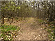 TQ7034 : Footpath and track junction in Shearnfold Wood by David Anstiss