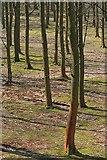 SK1789 : Woodland Below the Upper Derwent Reservoir by Mick Garratt