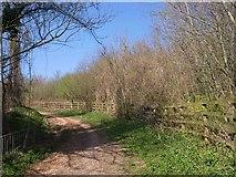 SX9066 : Bridleway near Broomhill Way by Derek Harper