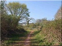 SX9066 : Bridleway near County Court by Derek Harper