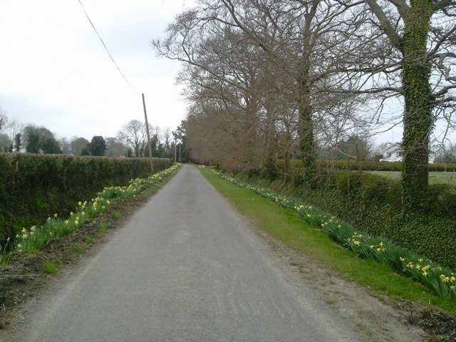 Colourful Country Road, Co Meath