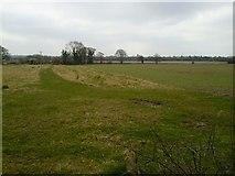 N9641 : Landscape, Butlerstown, Co Meath by C O'Flanagan