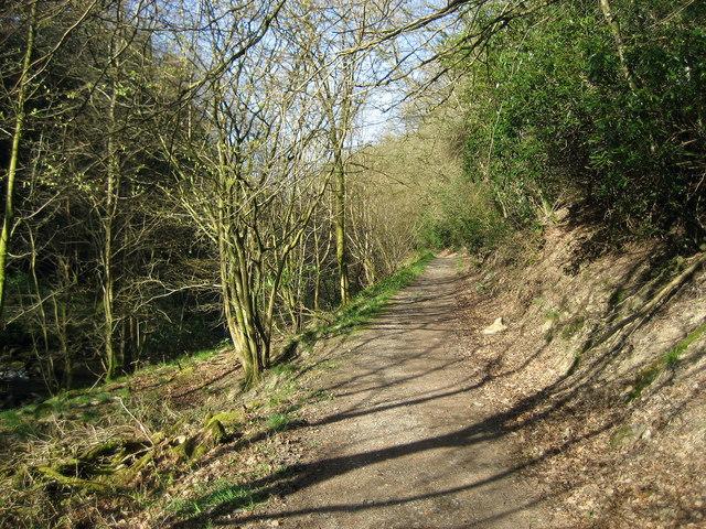 Woodland beside Barbon Beck