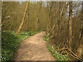 TQ6932 : White Anemones on the Sussex Border Path by David Anstiss