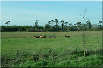R6453 : Pasture at Ahabeg by Graham Horn