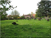 TF5617 : All Saints church in Tilney All Saints - churchyard by Evelyn Simak
