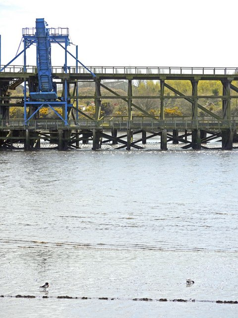 Shelduck and the Dunston Coal Staiths