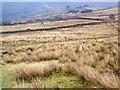 SD1891 : Rough grazing, Low Craghall by Maigheach-gheal