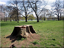 TQ2780 : Tree Stump, Hyde Park, London W1 by Christine Matthews