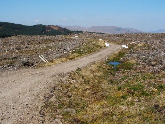 Forest track on Darleith Muir