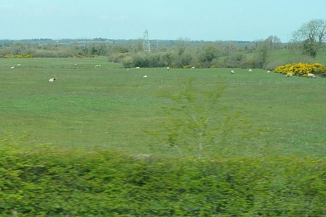 Pasture at Davidstown