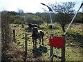 TQ5401 : Exmoor ponies on Lullington Heath by Peter Barr