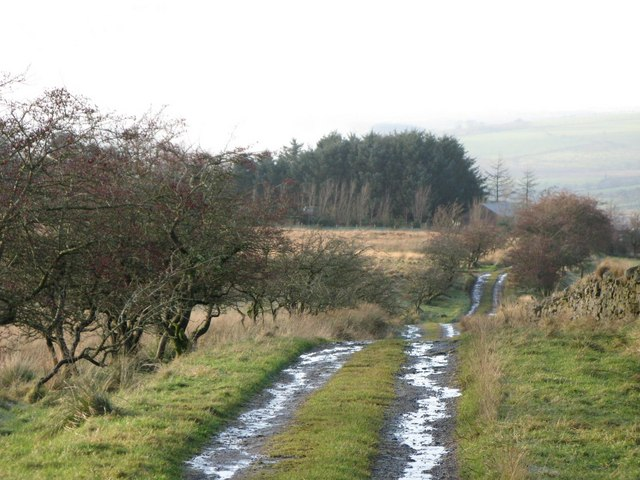 Track and pastures east of Crossgreens (2)