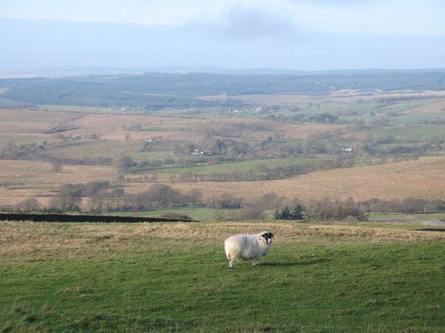 Pasture southeast of Park Head (2)