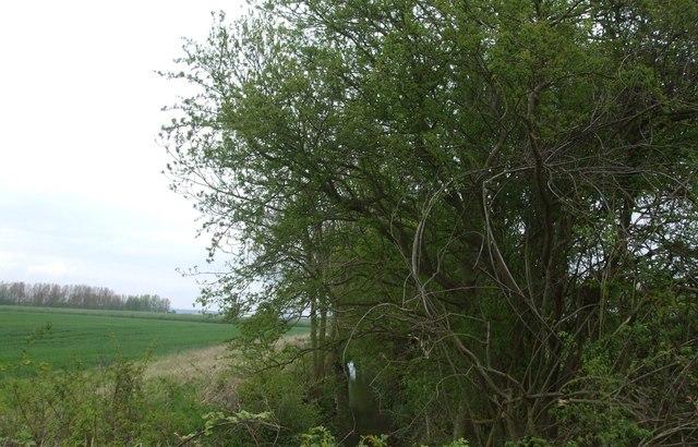 Farmland and Wellsprings Drain