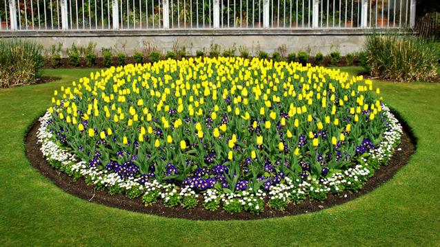 spring flower beds botanic gardens albert bridge cc by sa 2 0 geograph ireland. Black Bedroom Furniture Sets. Home Design Ideas