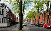 J3472 : Rugby Avenue, Belfast by Albert Bridge