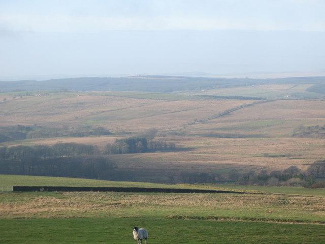 Pastures above Park Head (2)