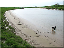 TF5902 : The River Great Ouse north of Salters Lode by Evelyn Simak