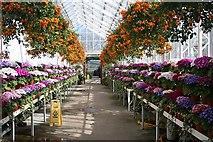 NJ9304 : Victorian Corridor, Winter Gardens, Duthie Park by Bob Embleton